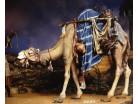 Dromedario bardato  - Collection Immanuel - Heide 14 CM