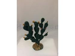 Cactus altezza cm. 6