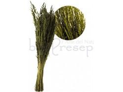Cipressina in busta da gr 30 per creare vegetazione. Presepi pigini