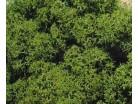 Lichene verde- - 30 gr.
